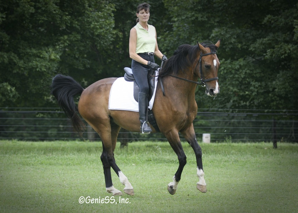 Noah, a lesson horse, in canter pirouette